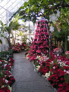 Christmas Garden Inspirations