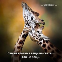 15:00 Нежность (поделитесь с друзьями)  (фото — instagram.com/animalplanet_fan) #нежность, #счастье, #любовь, #tbworker