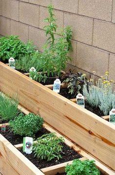 Coin plantation d'herbes aromatiques séparé du reste du jardin potager avec des jardinières en bois. Cales en interstices refermées par une planche en bois forment les compartiments réguliers.
