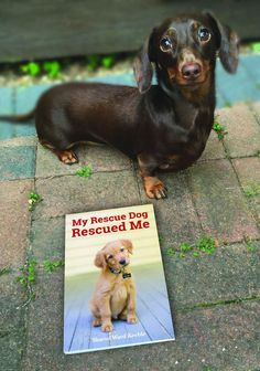 Shumi the dachshund with her copy of My Rescue Dog Rescued Me