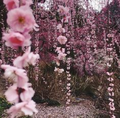 Image about pink in Juno by space cowgirl on We Heart It - Photography, Landscape photography, Photography tips Spring Aesthetic, Nature Aesthetic, Flower Aesthetic, Aesthetic Gif, Aesthetic Vintage, Aesthetic Pictures, Aesthetic Wallpapers, Aesthetic Drawing, Beige Aesthetic