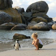 Funny Animals With Captions, Funny Animal Pictures, Super Funny, Funny Cute, Beverly Hills, Funny Dares, Animals For Kids, Cute Animals, Penguin Images