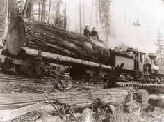1908 Logging Train, Washington State.  I often remember one portion of a tree would be as large as a whole truck.