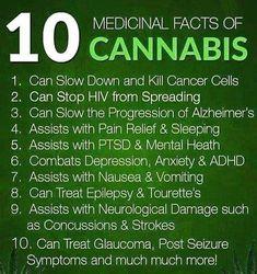 10 fun facts CBD
