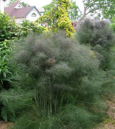 Thug-a-licious: When Bad Plants Go Good | Midwest Edition eNewsletter