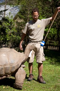 Danny works on Aldabra tortoise training. The target pole provides a visual cue for the tortoise.