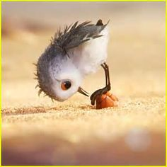 piper pixar - AT&T Yahoo Image Search Results