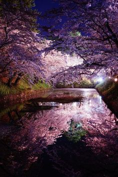 "lifeisverybeautiful: ""Cherry Blossom, Hirosaki Castle, Aomori, Japan via αcafe Beautiful World, Beautiful Places, Beautiful Pictures, Cherry Blossom Japan, Cherry Blossoms, Aomori, Japanese Landscape, Art Japonais, Parcs"