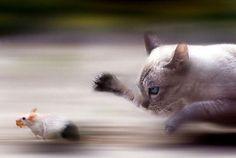 動物や生き物たちの決定的瞬間の数々:ハムスター速報