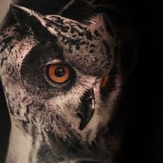 amazing realistic owl tattoo!!!!