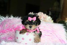 Baby puppy :)