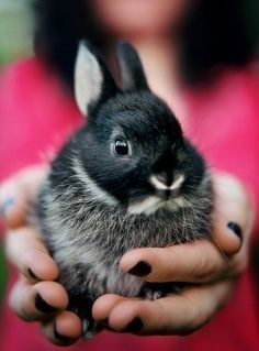 Netherland dwarf rabbit! They stay this small even when full grown! 2 1/2 - 3 pounds!