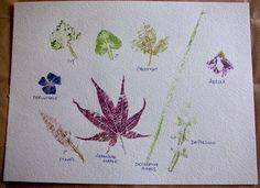 Impresiones naturales de plantas y flores en papel de acuarela9