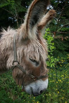 donkey - check out that adorable bundle of hair!