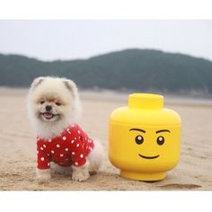 「 Happy Friday out there!  Regram from @letsdoori _  #roomcopenhagen #lego #legostorage #legostoragehead #legominifigure #beach #dog #cuteness 」