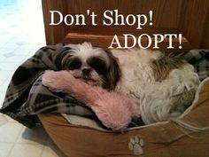 Don't Shop - Adopt!!