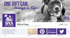 "Have you ""liked"" the @SPCAOFTEXAS on #Facebook yet? Don't miss adoption pictures, available animals and ways to get involved!"