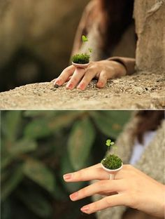 Four leaf clover ring Terrariums, Clover Ring, Three Leaf Clover, Fancy Schmancy, Rings Cool, Green Nature, My Secret Garden, Clever Design, Green Day