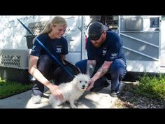 Helping Shelter Animals Impacted by Hurricane Joaquin