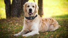 Collares para perros con tecnologia de avanzada para su cuidado localización .
