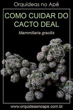 Cacti And Succulents, Planting Succulents, Low Maintenance Plants, Cactus Y Suculentas, Clay Pots, Red Roses, Backyard, Mini Cactus, Gardening