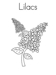 Printable Flower Coloring Pages, Coloring Book Pages, Coloring Pages For Kids, Free Coloring, Colouring, Pinterest Sketches, Lilac Tattoo, Flower Sketches, Spring Projects