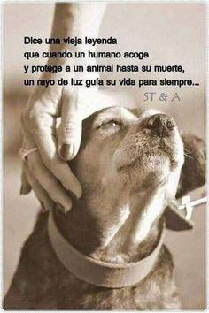 Frases sobre amar y acoger a un perro