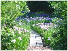 François Goffinet - Iris Garden