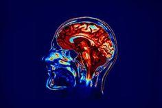 Güney Kaliforniya Üniversitesi Biyomedikal Mühendisi Theodore Berger, insan hafızasını geliştirebilecek bir cihaz üretmek için çalışmalar yürütüyor. Bu amaç için, beynin hatırlama işlevini yerine getiren hipokampus bölgesinin yapay bir versiyonunu üreten Berger bu cihazını geliştirmek için öncelikle hayvanlarla çalıştı.