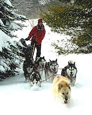 Snow is great too!  When Husky Power opened in 2004, there were no other MD dogsledding companies--so unique!  In fact, we had to huge difficulty finding business insurance because of that.