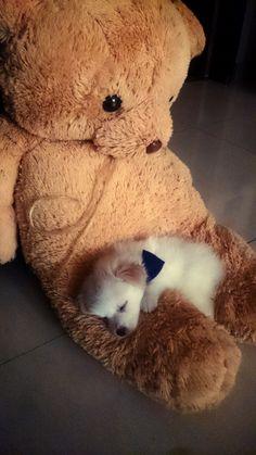 Freya, my puppy, found a new sleeping buddy :) (Source: http://ift.tt/1HDpCXz)