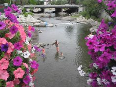 Low water on the Truckee River in downtown Reno, Nevada, NV.