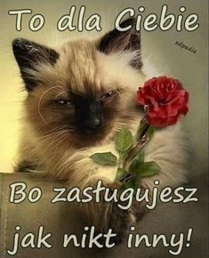 Citations Souvenirs, Image Fb, What's New Pussycat, Smoke On The Water, Greetings Images, Love Your Neighbour, Bon Weekend, Cat People, Man Humor