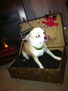 The dog bed we made from a vintage suite case