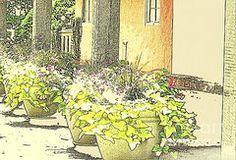Teresa Johnson - Patio Plantings