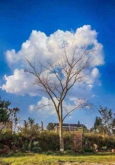 This tree and those clouds . Browse new photos about This tree and those clouds . Most Awesome Funny Photos Everyday! Photos Panoramiques, Dame Nature, Perfect Timing, Art Graphique, Belle Photo, Cool Photos, Amazing Photos, Awsome Pictures, Random Pictures