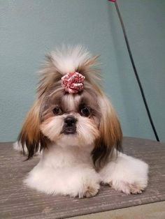 Join our new vip club receive offers updates and more pet schedule an appointment to get your pets updo done today find this pin and more on pet grooming billings mt solutioingenieria Images