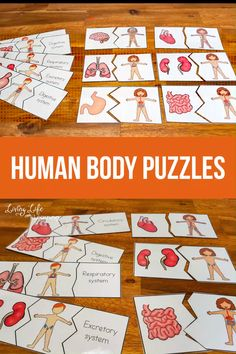 Have a blast learning about the human body with these fun human body puzzles to learn about the human body organs and the human body systems they belong to. A fun biology activity to get to know the human body systems found in your body. The Human Body, Human Body Lesson, Human Body Science, Human Body Activities, Human Body Organs, Human Body Unit, Human Body Systems, Kindergarten Science Activities, Kids Learning Activities