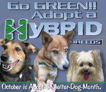 Animal Shelter Adoption, Shelter Dogs, Pet Adoption, Animal Welfare, Pet Beds, Humane Society, Dog Life, Dog Days, Pup