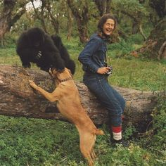 Dian Fossey with Coco, Pucker Puss and dog Cindy Primates, Dian Fossey, Felix Rodriguez, Gorillas In The Mist, National Geographic Photography, Jane Goodall, Mountain Gorilla, In The Zoo, Animal Magic