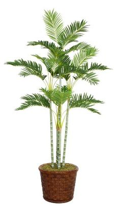 nice  Beautiful lifelike Palm tree in a Fiberstone planter No need to shop for a planter separately - comes complete with decorative planter Artificial plants let you decorate without concern for water damage, trimming, or soil.   https://www.silkyflowerstore.com/product/laura-ashley-73-inch-tall-palm-tree-in-17-inch-fiberstone-planter/