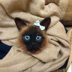 Купить Войлочная брошь Кошка - коричневый, кошка, брошь ручной работы, брошь, коты и кошки