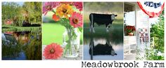 I love her photography of life on the Meadowbrook Farm - and how she shares her life with her readers. I am not this kind of person - but the energy   she puts out is great.
