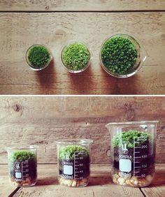 Moss Terrarium, Vertegris, $25