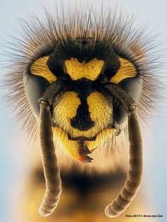 Wasp by Arno van Zon on 500px