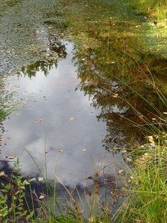 Reflections. photo: Johanna Rehn