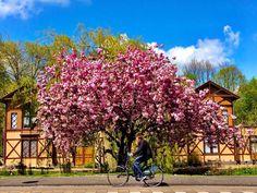 #amsterdam #Nederland #spring #bike