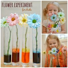 Flower Experiment for Kids | Growing A Jeweled Rose