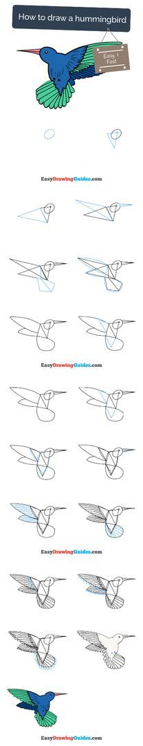 Flower Drawing Tutorials, Drawing Tutorials For Kids, Art Tutorials, Easy Art Projects, Craft Projects For Kids, Arts And Crafts Projects, Spring Arts And Crafts, Hummingbird Drawing, Online Drawing