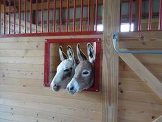 Little Longears Donkey Rescue